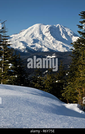 WA15445-00...WASHINGTON - Early morning view of Mount Rainier from the summit of Suntop Mountain in the Mount Baker-Snoqualmie National Park. - Stock Photo