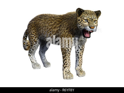 3D Rendering Big Cat Leopard on White - Stock Photo