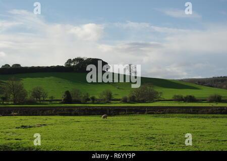 Lush Green Rolling Hills with Woodland. Devon Farming Landscape, Powderham, Exeter, UK. - Stock Photo