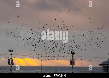 Blackpool, Lancashire. 7th December 2018. UKWeather. The skies darken over Blackpool as tens of thousands of Starlings swarm over the North Pier. An estimated 20, 000 roosting birds swoop and position to pick the best spot to survive the cold night on the Fylde coast; described as the last dance before bed, the reason for the swooping,  twisting and twirling remains largely a mystery. Grouping together offers safety in numbers – predators such as peregrine falcons find it hard to target one bird in the middle of a hypnotising flock of thousands.    Credit: MediaWorldImages/Alamy Live News - Stock Photo