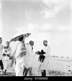 Mahatma Gandhi fondling a newborn goat, September 1938 - MODEL RELEASE NOT AVAILABLE - Stock Photo