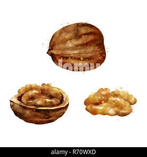 Walnut on white background. Watercolor illustration - Stock Photo