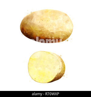 Potato on white background. Watercolor illustration - Stock Photo