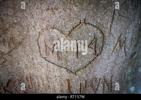 Heart carved into a tree with letters M and M, Visby, Gotland Island, Sweden - Stock Photo