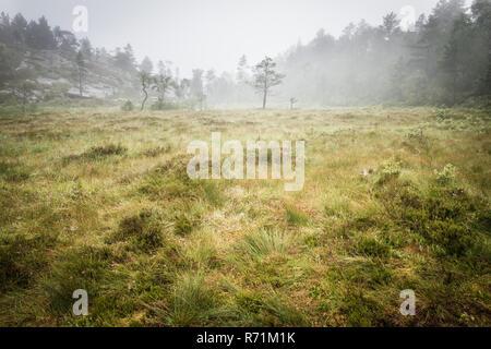 bog swapm on walkway to Trolltunga, Norway - Stock Photo