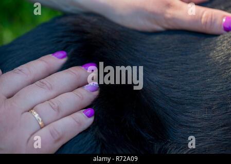 Human hands doing dog massage - Stock Photo