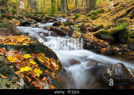 Bergbach, Fluss Ilse, Ilsenburg, Nationalpark Harz, Sachsen-Anhalt, Deutschland - Stock Photo