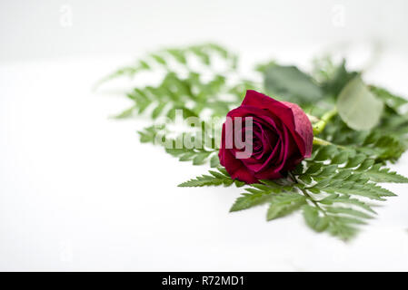 red rose decrepit on green on white background - Stock Photo