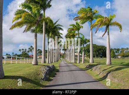 Lion Castle Plantation Estate entrance, Barbados - Stock Photo