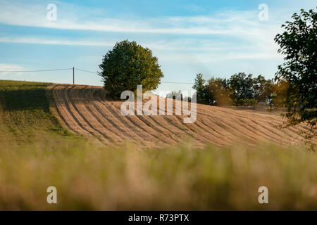 Freshly squeezed cornfield with dried residues and grain peels in the field - Stock Photo