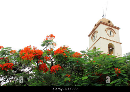 beautiful church in Santa Cruz de la Sierra city center, Bolivia. with blooming flowers - Stock Photo