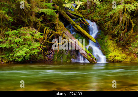 Seasonal waterfall sheets down the moss covered rocky banks along the Salmon River in Mt. Hood National Forest. - Stock Photo