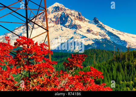 Electric power tower, autumn color shrub in the foreground of this view of Mt. Hood with a dusting of early snow, and the timberline base of evergreen - Stock Photo