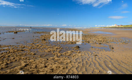 Sea gulls feed in tidal pools on the sands and mud of Blackpool Beach on a summer day, with the mountains of Cumbria's Lake District in the distance. - Stock Photo