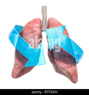 Human lungs with arrows. Treatment and recovery concept. 3D rendering isolated on white background - Stock Photo