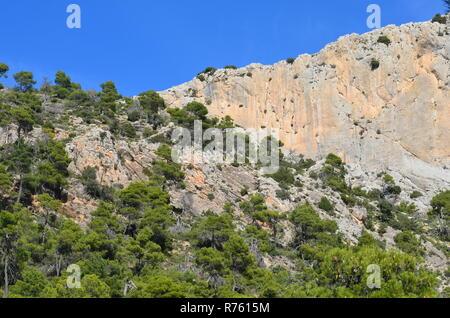 Aleppo pine Pinus halepensis forests in Sierra Espuña massif, Murcia (South-eastern Spain) - Stock Photo