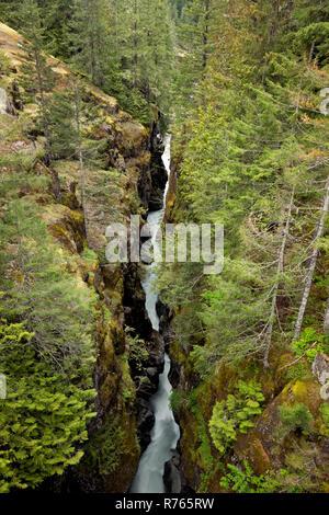 WA15473-00...WASHINGTON - The Cowlitz River flowing through Box Canyon in Mount Rainier National Park. - Stock Photo