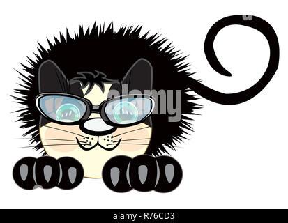 Ruffled black cat - Stock Photo