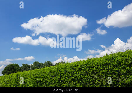 Hedge against the sky - Stock Photo