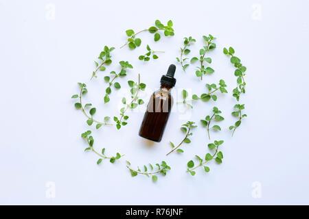 A bottle of oregano essential oil with fresh oregano leaves on white background. - Stock Photo