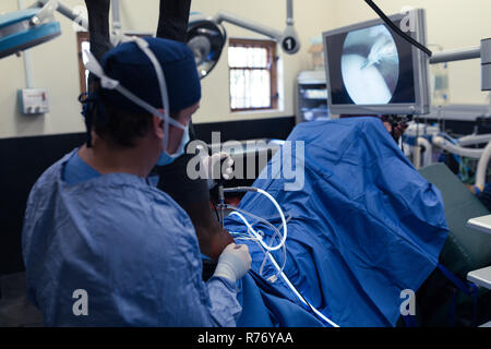 Female surgeon operating a horse in operation theatre - Stock Photo