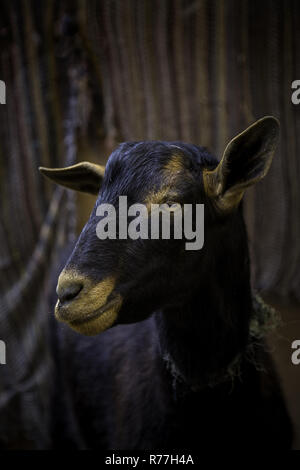 Sheep on an animal farm - Stock Photo