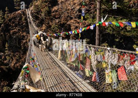 Nepal, Larja Dobhan, laden pack animals crossing upper Larja suspension Bridge over Dudh Khosi river - Stock Photo