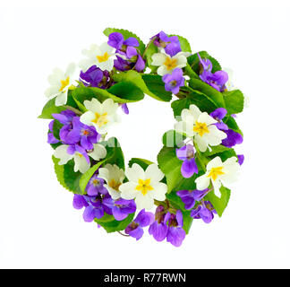 Wreath of woodland violets and primula. Isolkated on white background. - Stock Photo