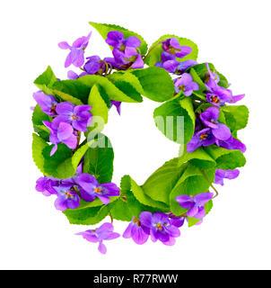 Wreath of woodland violets. Isolkated on white background. - Stock Photo