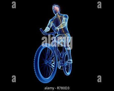 3d rendered illustration of a cyclist's brain. - Stock Photo