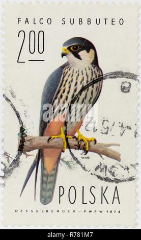 POLAND - CIRCA 1974: A postage stamp printed in Poland shows Eurasian hobby - Falco subbuteo, circa 1974 - Stock Photo