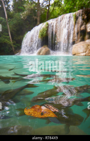 Wang Matcha, the second tier of Erawan Waterfall in Kanchanaburi Province, Thailand, with fish swiming in the clear water. - Stock Photo
