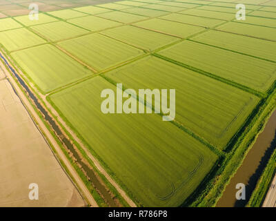 The rice fields are flooded with water. Flooded rice paddies. Agronomic methods of growing rice in the fields. - Stock Photo