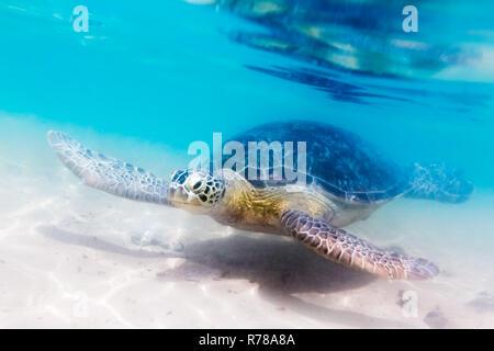 Turtle at Hikkaduwa beach - Stock Photo