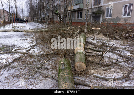 fallen tree branches at the front yard of the house - Stock Photo