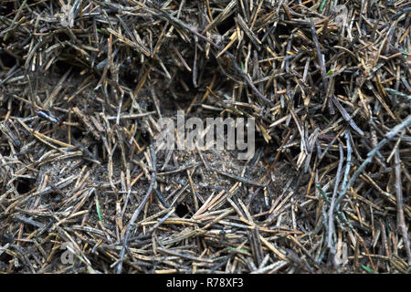The texture of a brown natural forest anthill with ants a lot of small insects in the forest. The background