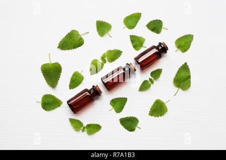 Melissa lemon balm essential oil with fresh leaves. - Stock Photo