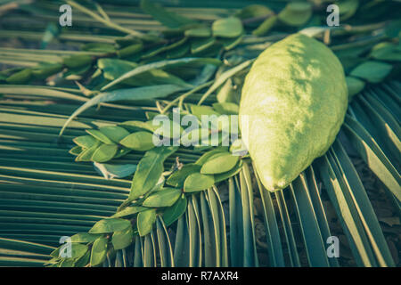 Traditional symbols (The four species) of jewish fall festival of Sukkot, etrog, palm branch, myrtle and willow. - Stock Photo