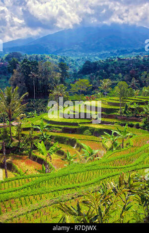 Jatiluweh Rice Terraces, Bali, Indonesia - Stock Photo