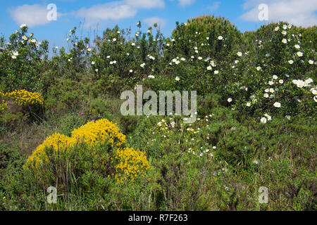 Wildflowers in spring, Algarve, Portugal - Stock Photo