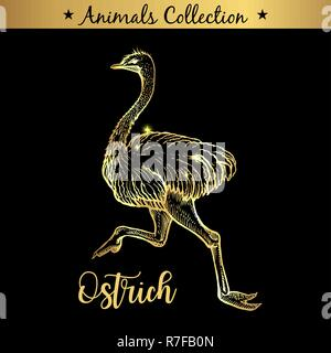 Golden and royal Hand Drawn Emblem of farm Ostrich Bird animal. Butchery shop branding, meat products. Butcher market. Gold Outline Sketch and lettering. Contour drawing concept - Stock Photo