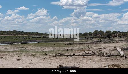 Landscape at Boteti River, Makgadikgadi National Park, Botswana, Africa - Stock Photo