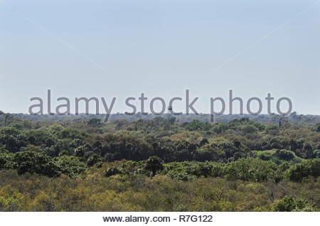 Forest and distant fire lookout tower from Myakka Canopy Walkway in Myakka River State Park - Stock Photo