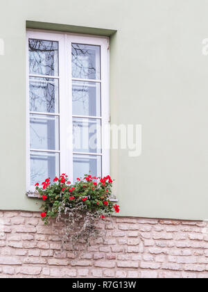 Typical european window with flowers. Flower box below a windows on an apartment building. - Stock Photo