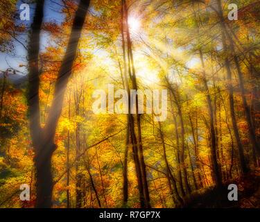 DE - BAVARIA: Autumnal Kalvarienberg Forest at Bad Toelz  (HDR-Image) - Stock Photo
