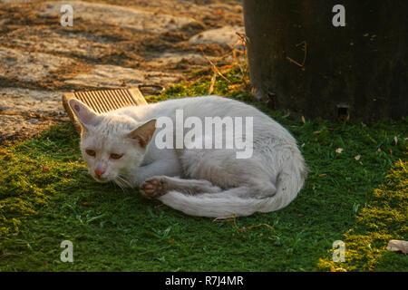 White domestic cat sleeps on green grass - Stock Photo