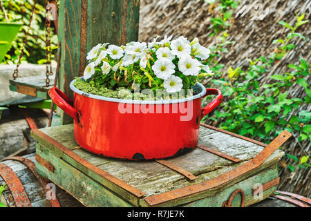 White petunias are planted in a red saucepan. The saucepan stands on an old scale, Tihany, Veszprem county, Central Transdanubia, Hungary, Europe - Stock Photo