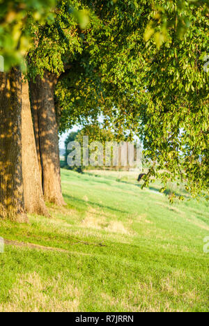 Old dike in the Netherlands with beautiful evening light over the old trees - Stock Photo