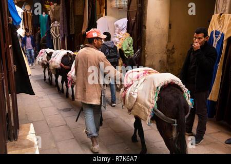 Morocco, Fes, Fes el Bali, Medina, man guiding pack anmals down narrow lane, - Stock Photo