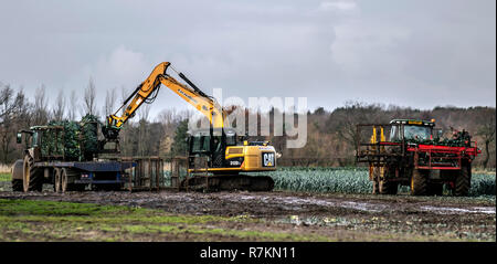 Burscough, Lancashire. 10th Dec 2018. UK Weather: Mechanical harvesting leeks on sodden fields. During spells of wet weather or in damp conditions, leek rust may attack the crops. Leek producers are now struggling to make ends meet according as the cold spring and record dry summer take their toll on a category that is already losing market share. Leeks are tolerant of cold, so harvest is delayed until after the first frosts. According to the British Growers Association  yields are already down 23 per cent. Credit: MediaWorldImages/AlamyLiveNews - Stock Photo